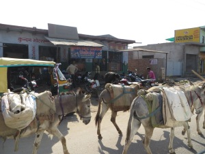 Agra to Jaipur, Donkeys