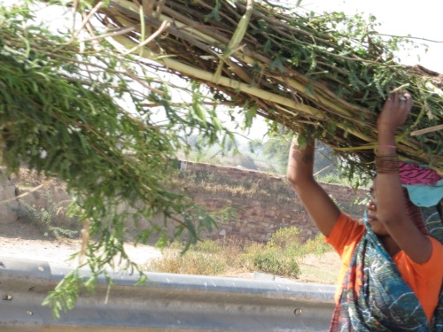 Agra to Jaipur, Woman carries a heavy load