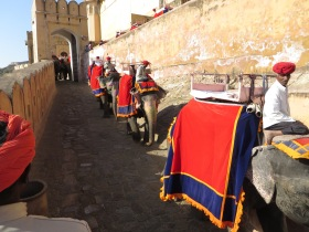 Jaipur, Elephants going down from the Palace