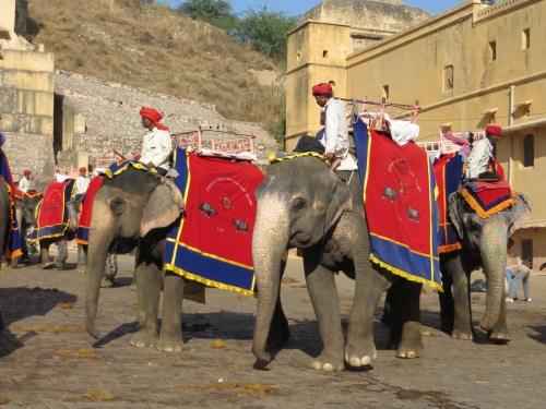 Jaipur, Elephants ready for us!