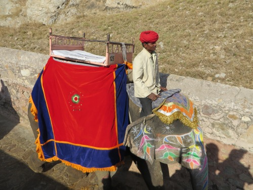 Jaipur, Painted Elephant #1
