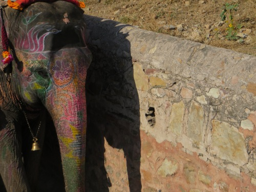 Jaipur, Painted Elephant #2