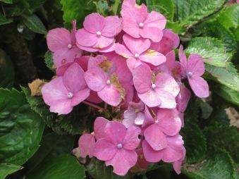 Blog MP flower 5
